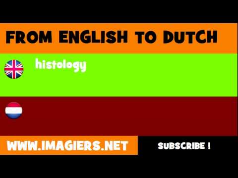 NEDERLANDS = ENGELS = histologie