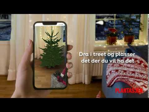 Hvilket juletre passer best for deg?