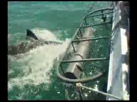 Great White Sharks, Cage Dive, Gansbaai – Part 1.flv