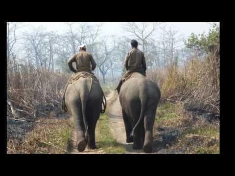 Elephants and Rhinos In Chitwan National Park – NEPAL