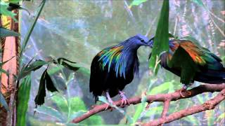 Tropical Birds in Houston Zoo