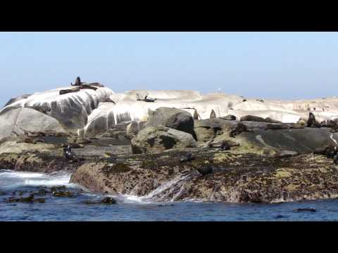 South Africa Seal in Duiker Island