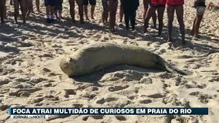 Foca atrai multidão de curiosos em praia do Rio