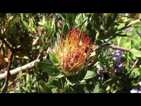 Kirstenbosch National Botanical Garden (South Africa)