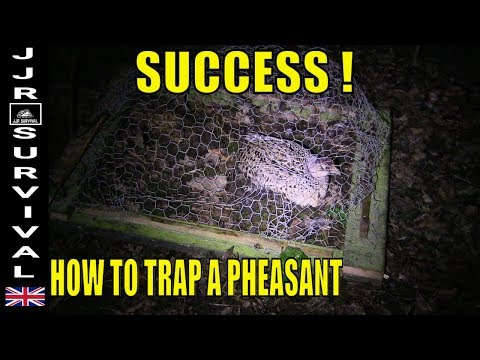 How To Trap A Pheasant