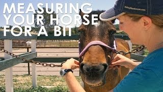 How To Measure Your Horse for Bit Size