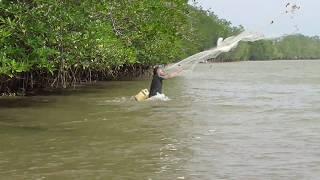 Lihat....!!! Master Jala ikan tebar jala ikan di muara sungai jenggalu