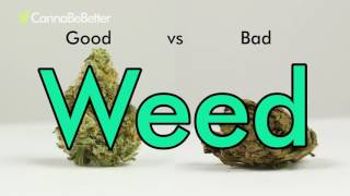 How to tell GOOD WEED VS BAD WEED