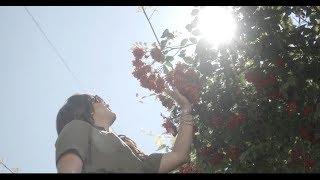Anita Micova - Zlatno Zito (Official Video 2017) 4K