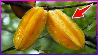Você Conhece os Efeitos Milagrosos Dessa Fruta? Ela Controla o Diabetes, Colesterol e Muito Mais!