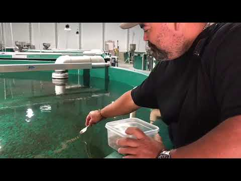 Marine Harvest Canada's Dalrymple freshwater hatchery in Campbell River has come a long way.