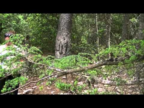 Azrou Apes & wild camping in spring