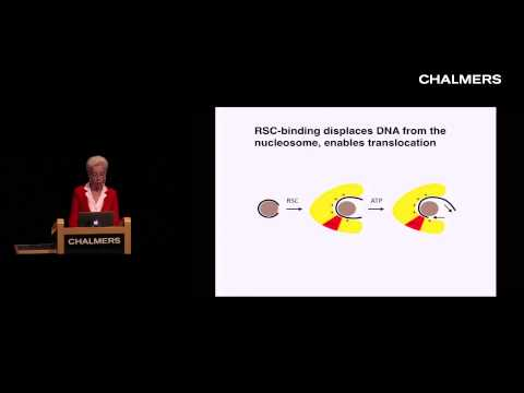 Yahli Lorch: Chromatin remodeling