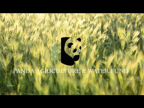 Existe un lugar en el que el verde es algo más que el color es de la rentabilidad y en el que es rojo no es sólo sinónimo de pérdida. Existe un lugar en el que el líquido es algo más que en un término contable y dónde crecer no es sólo aumentar patrimonio, donde agricultura y finanzas se encuentran. Panda Agriculture & Water Fund