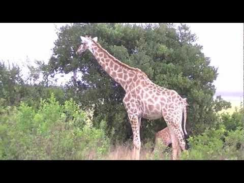 Zuid Afrika 3 – Tsitsikamma National Park – Plettenberg Bay Game Reserve
