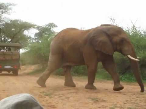 Incredible elephant encounter – Kruger National Park