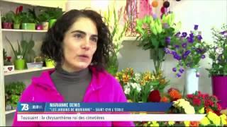 Toussaint : le chrysanthème roi des cimetières