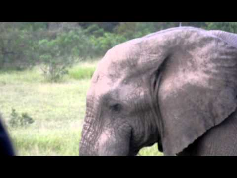 Elephant Encounter in Kruger National Park