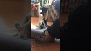 Perrita bailando el perreo #Vaquita #DaleHastaAbajo
