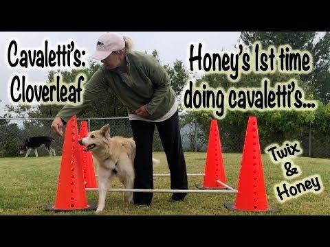 Cavaletti's: Cloverleaf (Honey & Twix)