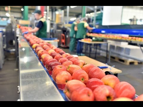 Food Safety and HACCP   The Basics Online training