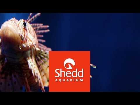 Unbelievable Lives Here: Lionfish