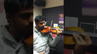 Seagull's sounds on Violin