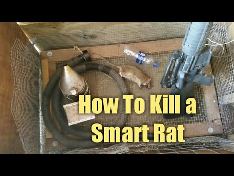 How to Kill a Smart Rat - Without Poisoning Your Own Animals & Property