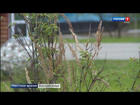 Прогноз погоды в Республике Коми на неделю 30.08.-05.09.2021