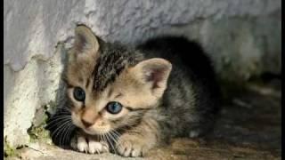 Ukolébavky pro nejmenší: Kočičí usínání