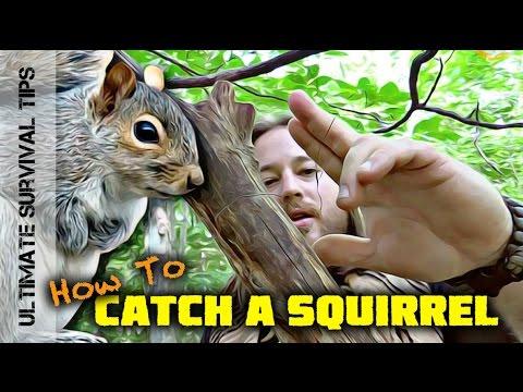 EASY! Squirrel Pole Snare Set-Up - SURVIVAL TRAPS / SNARES 101