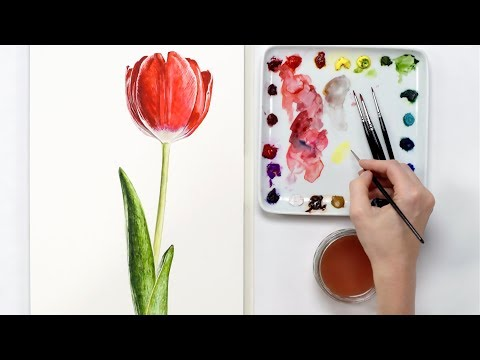 How to paint a 3D red tulip in watercolor with Anna Mason