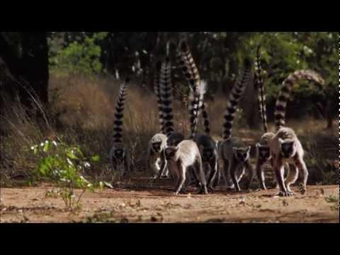 生命原力 - 馬達加斯加 - YouTube