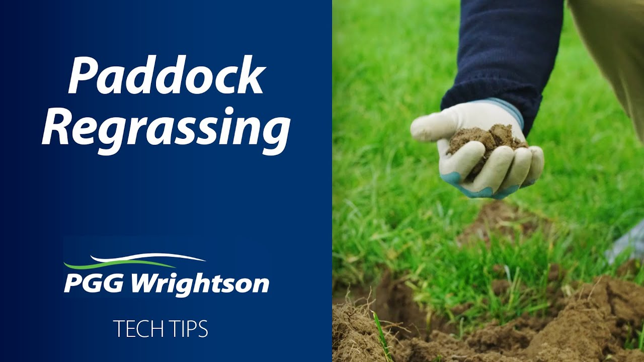 Paddock Regrassing | PGG Wrightson Tech Tips
