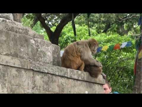 Voyage au Nepal – Swayambunath (Monkey Temple) – Kathmandu – Mandap Travels