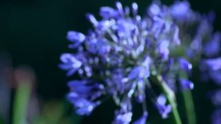 DreamScape (Blue solar remix)