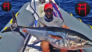 Red Tuna Akita Fishing