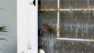Where do Wasp live ?