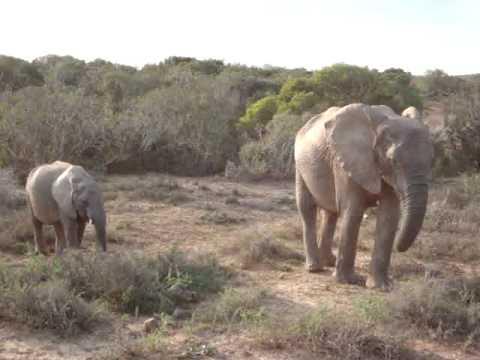 Elephant family at Addo Elephant Reserve