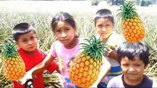 Paraiso de Piñas - El Jocotillo Guatemala