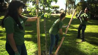 TreePeople - Staking a Tree