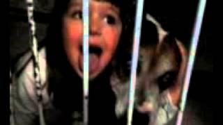 Pitbull Fufuca chorando e Luisa apoiando :(