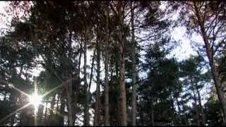 Pajaro Sunrise - Sunday Morning Birds (Singin' Hallelujah)