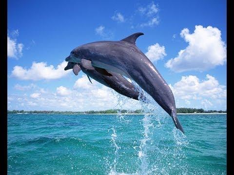 Dolphins in Walkerbay – Hermanus