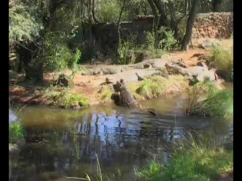 Kwena Chalets and Crocodile Sanctuary
