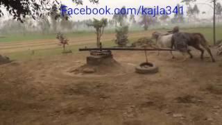 India punjab 2