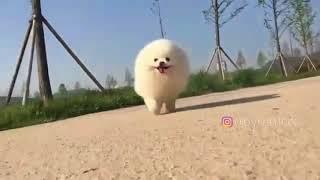 Running around at the speed of sound