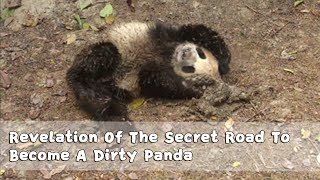 Revelation Of The Secret Road To Become A Dirty Panda | iPanda