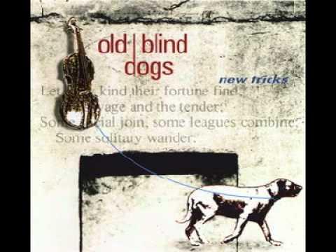 old-blind-dogs-the-wee-wee-german-lairdie-heikover
