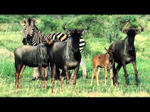 TLC African Tours & Safaris – The Kruger National Park, South Africa